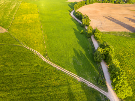 Drone Photo of the Road Between Trees in Colorful Early Spring in Countryside Village  - Surrounded with Dandelion Field