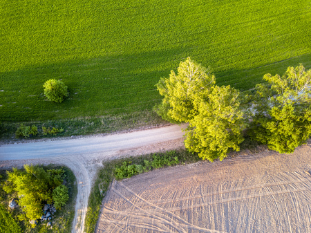 Drone Photo of the Crossroad Between Trees in Colorful Early Spring - Top down view with Freshly Cultivated Field on the one side and Dandelion Field on the Other Side