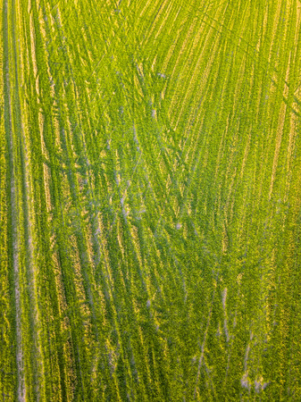 Drone Photo of the Freshly Mowed Field on Colorful Early Spring Day in Countryside Village  - Top Down View, Texture