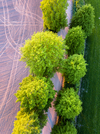 Drone Photo of the Road Between Trees in Colorful Early Spring in Countryside Village  - Freshly Mowed Field on the one Side and Cultivated Field on the other, Closeup Top Down