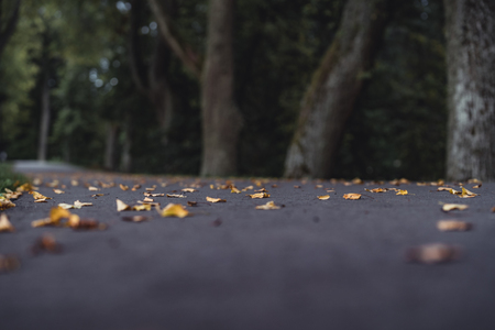 Moody, Dark Photo of the Road in a Park, Between Woods - Closeup View of Leaves With Blurred Background -Desaturated, Vintage Look with Space for Text, Autumn day