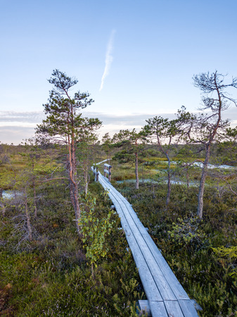 Moody Drone Photo of Colorful Moorland in Early Summer Sunrise with a Wooden Path Through it