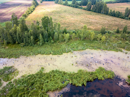 Aerial Drone Photo of the Countryside Forest, Top Down View in Sunny Summer Day - Background Material Imagens