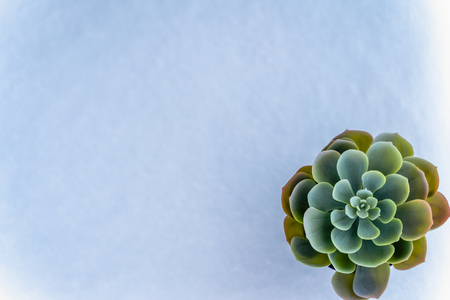 Closeup Photo of Isolated Plant in a Pot with the White Snow Background and Place for Text - Concept of the Peace and Harmony in Nature Stock Photo