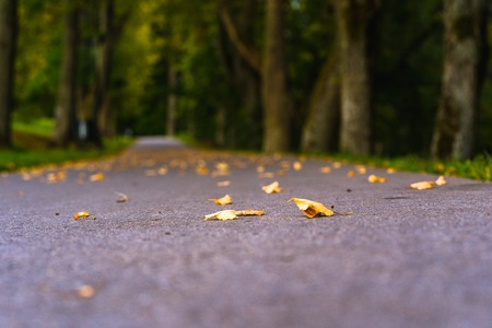 Colorful Photo of the Road in a Park, Between Woods - Closeup View of Leaves With Blurred Background with Space for Text, Sunny Autumn day, Partly Blurred Photo 写真素材