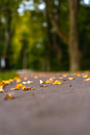 Colorful Photo of the Road in a Park, Between Woods - Closeup View of Leaves With Blurred Background with Space for Text, Sunny Autumn day, Partly Blurred Photo Stock Photo
