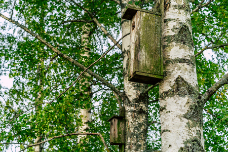 A Closeup of the Birdhouse on a Birch Tree on Early Sunny Spring Day - Concept of Natural and Environment Friendly Lifestyle