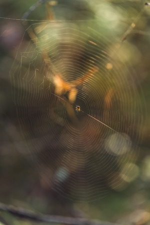 Isolated Spider Web with Spider in it in the Forest with Blurred Foliage in the Background - Sunny Autumn Day, Vintage Film Look