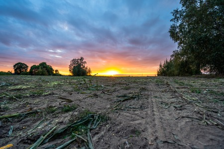 Freshly Cultivated Organic Corn Field for Biomass on Cloudy Summer Evening with Sunset Colors and Dramatic Sky - Concept of Nutrition full Vegetables and Renewable Energy for Gas and Fuel