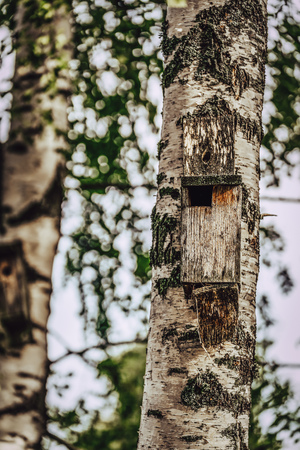 A Closeup of the Birdhouse on a Birch Tree on Early Sunny Spring Day - Concept of Natural and Environment Friendly Lifestyle, Vintage Film Look