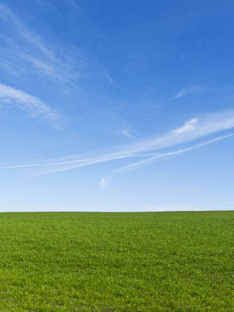 Beautiful green field with a clear blue sky photo