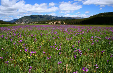 High Mountain Meadow Reklamní fotografie