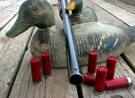 12 gauge shotgun resting on antique duck decoys