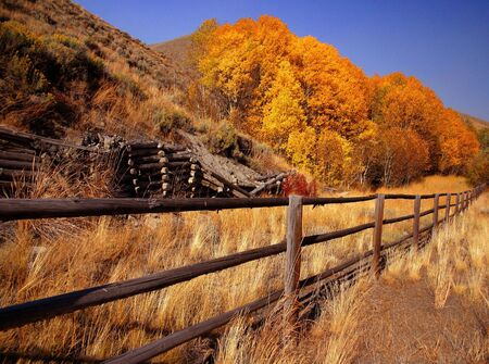 Autumn scene with aspen trees and rustic fence,Idaho Stock Photo