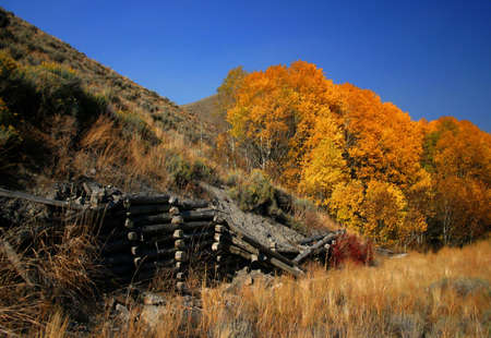 Autumn scene with aspen trees and rustic fence,Idaho Stock Photo - 936967