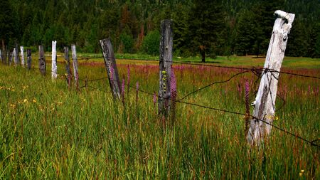 Rustic Idaho fence in spring with wild flowers Stock Photo - 1141461