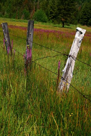 fencepost: Rustic Idaho fence in spring with wild flowers Stock Photo