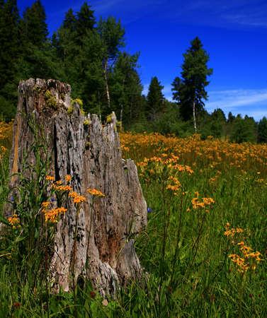 Wildflowers blanket meadow in rural Idaho spring