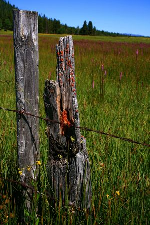 Rustic Idaho fence in spring with wild flowers photo