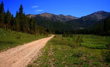 Dirt road disapearing into National forest in Idaho