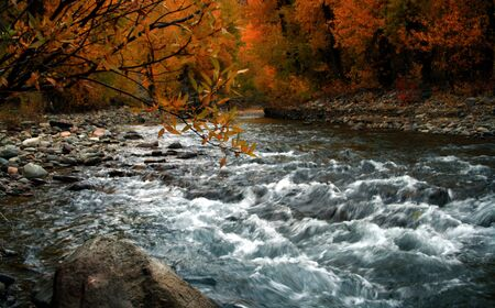 Autumn on the Big Wood River, Idaho