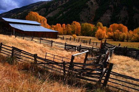 Rustic barn and fall aspens in central Idaho Stock Photo