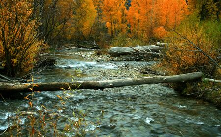 flowing water: Autumn on the Big Wood River, Idaho