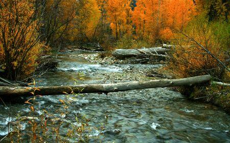 flowing river: Oto�o en el Big Wood River, Idaho