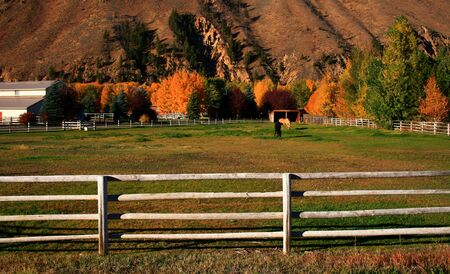 Horses grazing on peaceful autumn morning in Idaho Stock Photo - 1977970