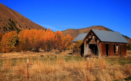 Aspens share field with brokedown shack in autumn Stock Photo - 2014095
