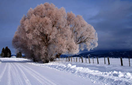 hoar frost: Winter morning featuring snow and hoar frost in central Idaho