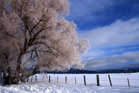 fenceline: Winter morning featuring snow and hoar frost in central Idaho