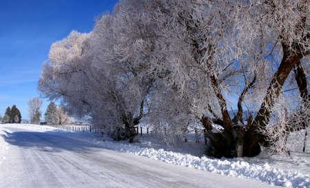 hoar frost: Hoar frost covering trees in sub-zero Idaho winter