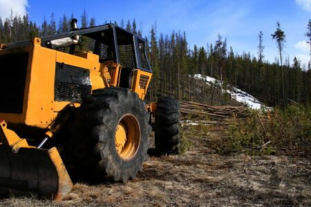 Tree thinning operation at Redfish Lake near Stanley Idaho