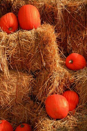 Pumpkins on bale of straw in autumn Reklamní fotografie