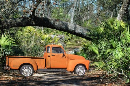 54 Pickup Truck in the wilderness near a fallen tree. Stock Photo