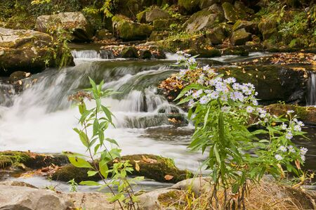 A Smoky Mountain waterfall with native flowers, Blood Root, in the foreground,