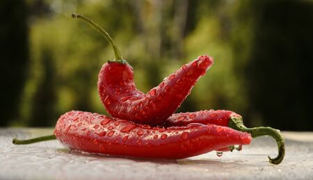 paprica: red hot chilli peppers