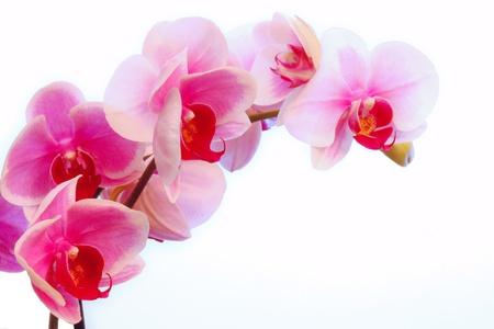Violet orchid flowers Standard-Bild