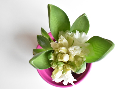 White potted Hyacinth on white background