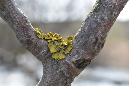 Yellow mold on the Bark of Tree