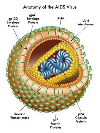 vih sida: SIDA Vectores