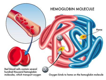 oxygen: hemoglobin