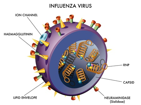 Influenza Virus Stock Vector - 14776740
