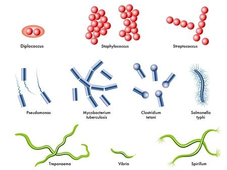 sporen: Bakterien Illustration