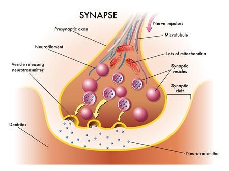 zenuwcel: synaps Stock Illustratie