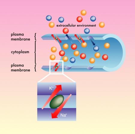 plasma membrane Vettoriali