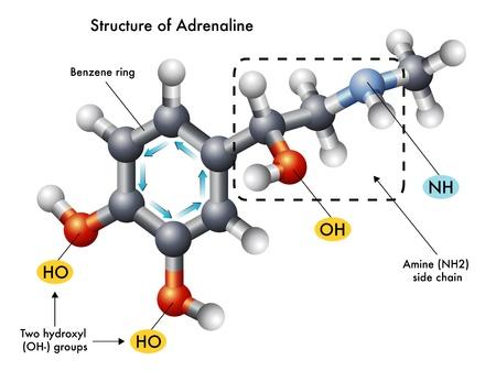 structure of adrenaline Stock Vector - 17907556