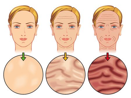 elasticidad: envejecimiento de la piel Vectores
