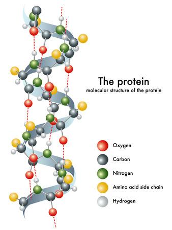 estructura: proteína Vectores